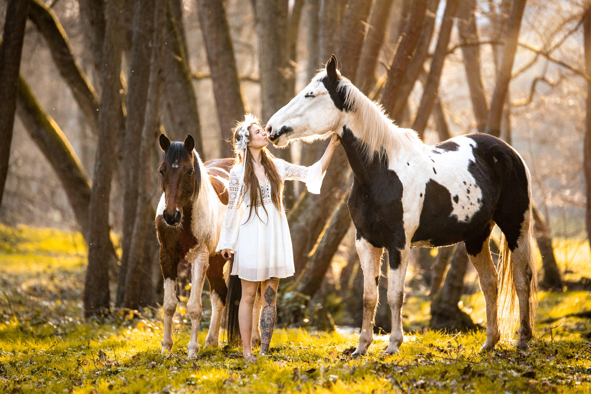 Pferde mit Mensch