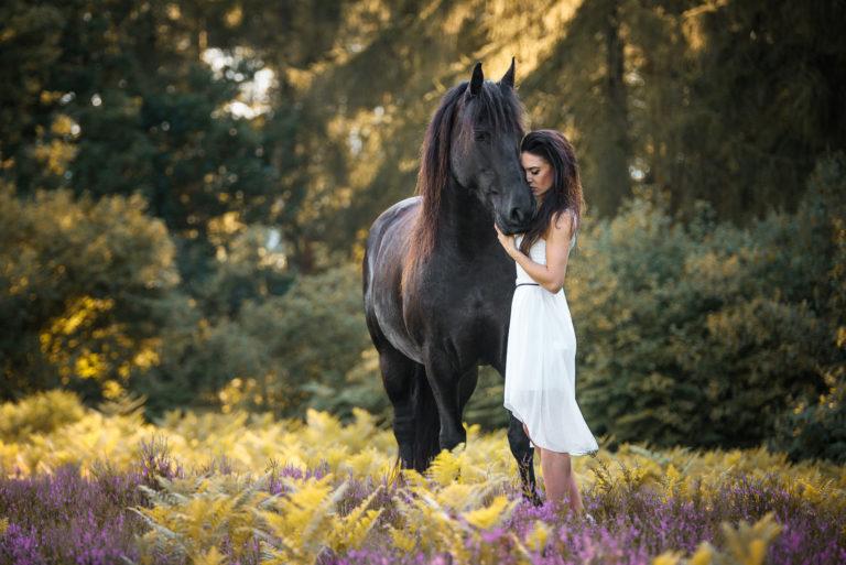 Pferd mit Mensch